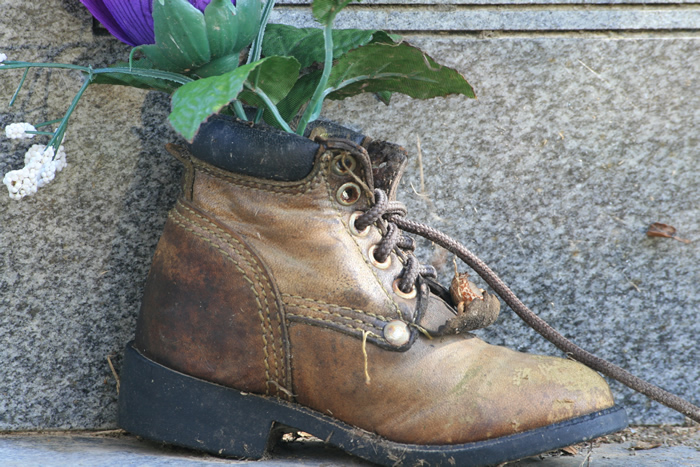 A shoe used as a planter
