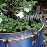 A drum planter
