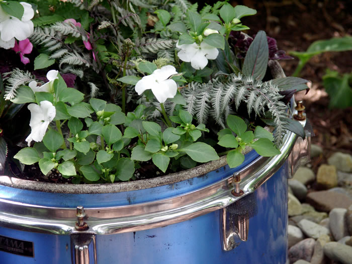 Planters: A drum planter